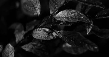 Diseño acromatico: Uso del color negro en la web